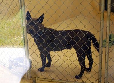 Charleston Animal Society's mission is saving lives