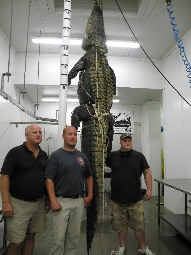 Clinton hunters land 771-pound gator