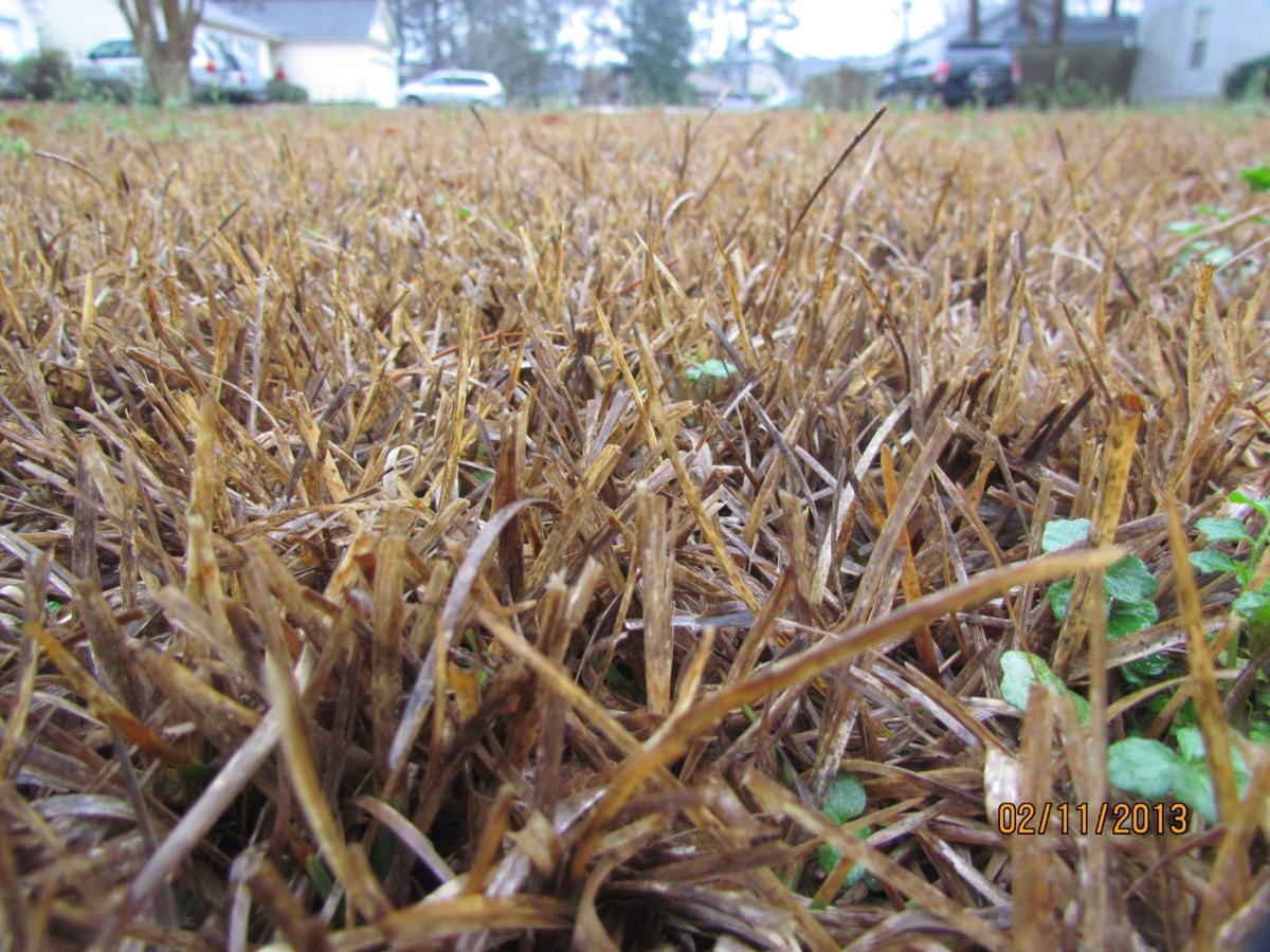centipede grass 05/06/18