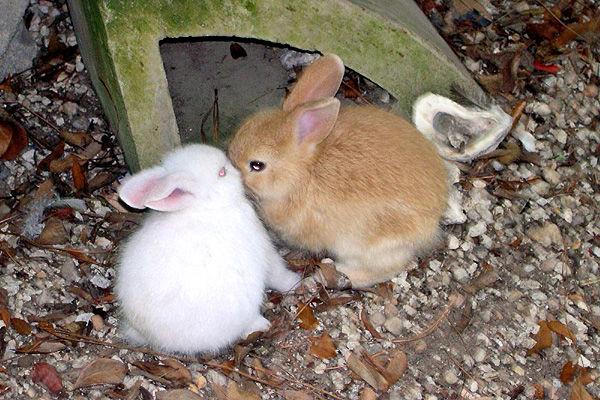 Group warns bunnies need long-term care