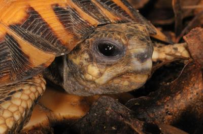 Turtle sanctuary coming to Cross