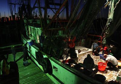 Where to find fresh South Carolina shrimp: 'The more marsh, the more