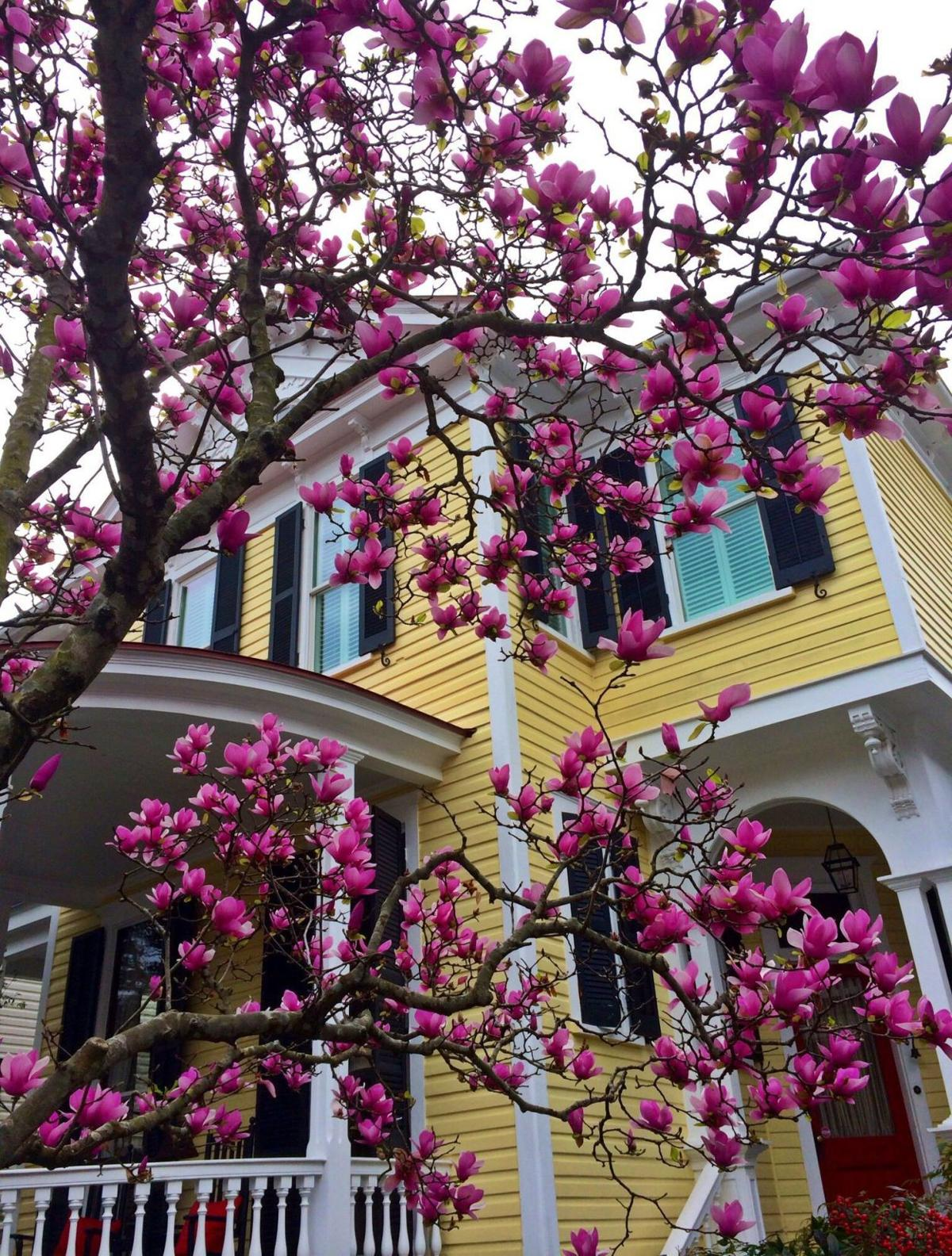 Spring in the Lowcountry