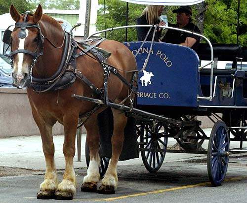 Carriage company files second appeal