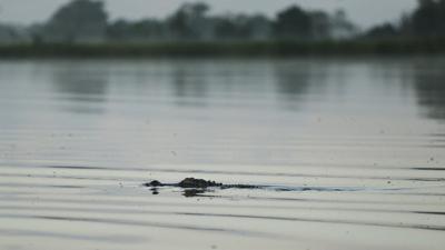 Lowcountry Alligator Hunts (copy) (copy)