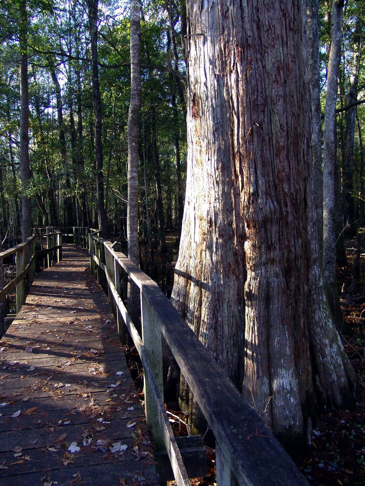 A walk in the (Beidler) park