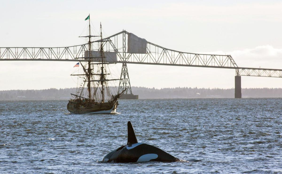 Fake orca nearly drowns before it can scare Ore. sea lions