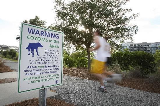 Coyote bites tourist