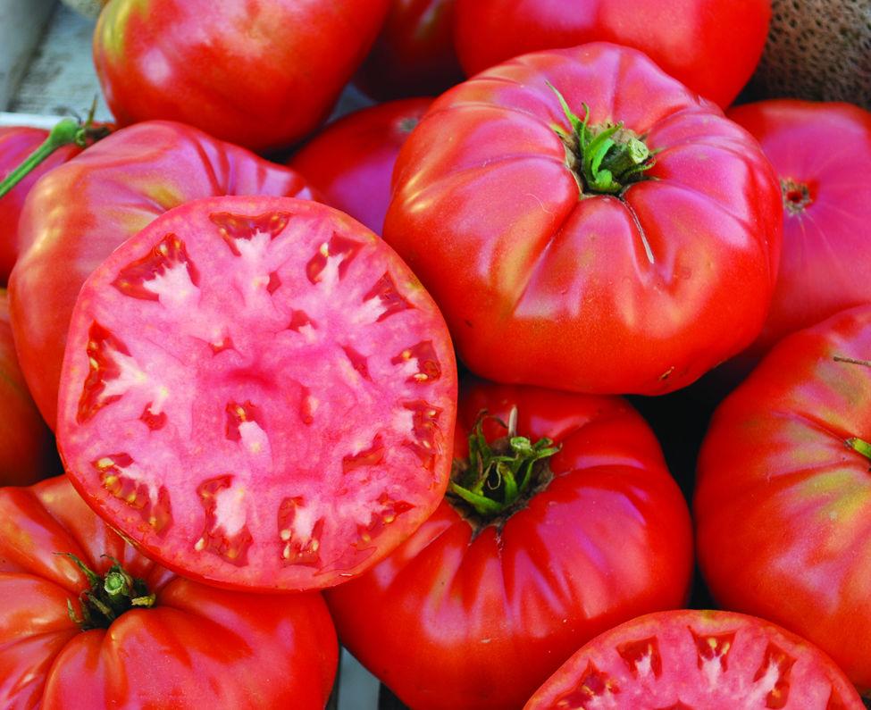 Whose heirloom tomatoes rock?