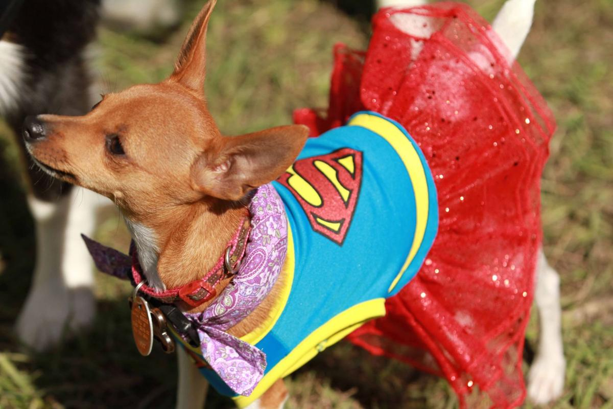 Bark in the Park! Oktoberfest