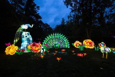 Chinese Lanterns Magnolia13.JPG