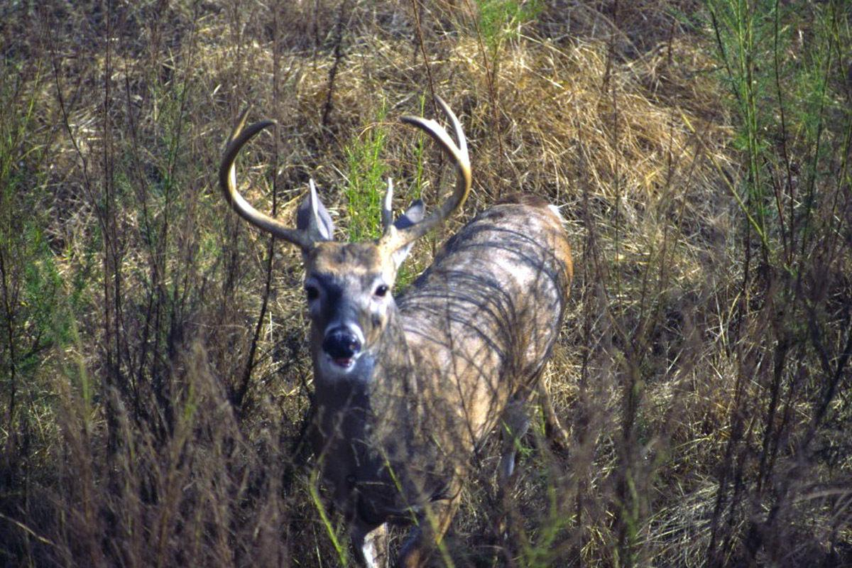 Record antler numbers were up in 2016 scoring sessions