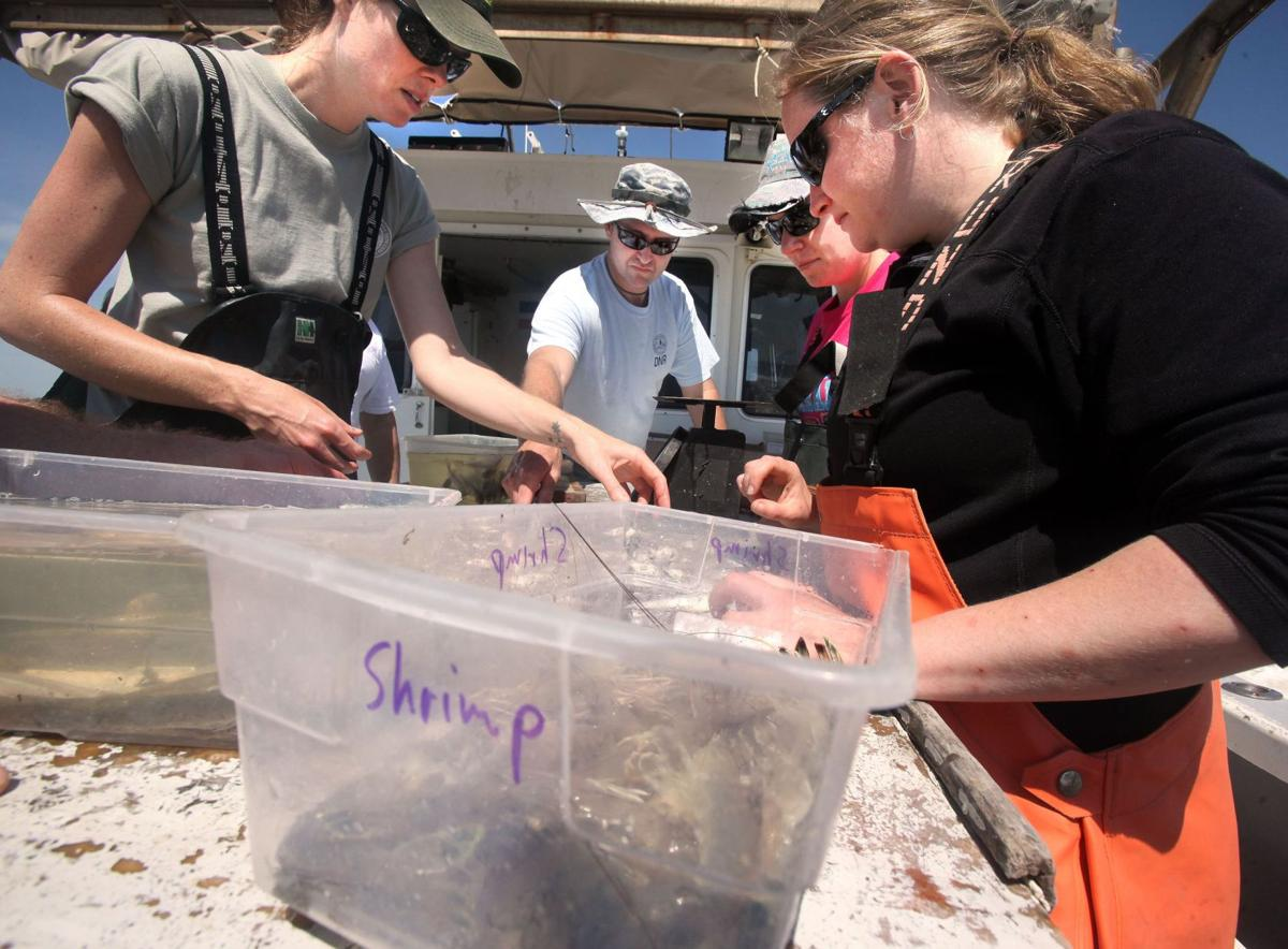 Signs improving for spring shrimp catch Shem Creek shrimpers on verge of extinction Leaking shrimp boat among last of the Shem Creek fleet Fleet blessing connects shrimpers, community Shrimp small, numbers 'decent' for spring season