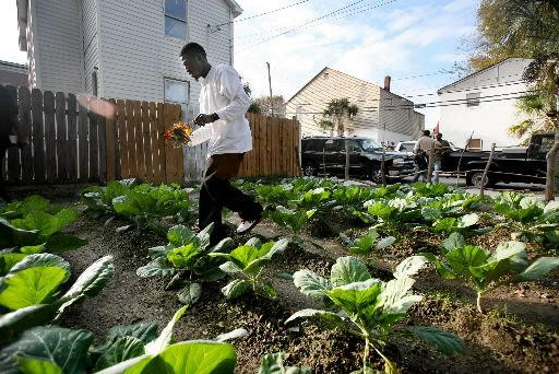 Gardening trio arrested in drug sweep