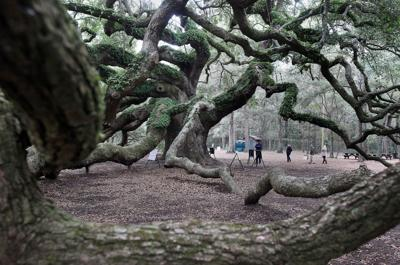 Unlikely collaborations give second wind to Lowcountry conservation