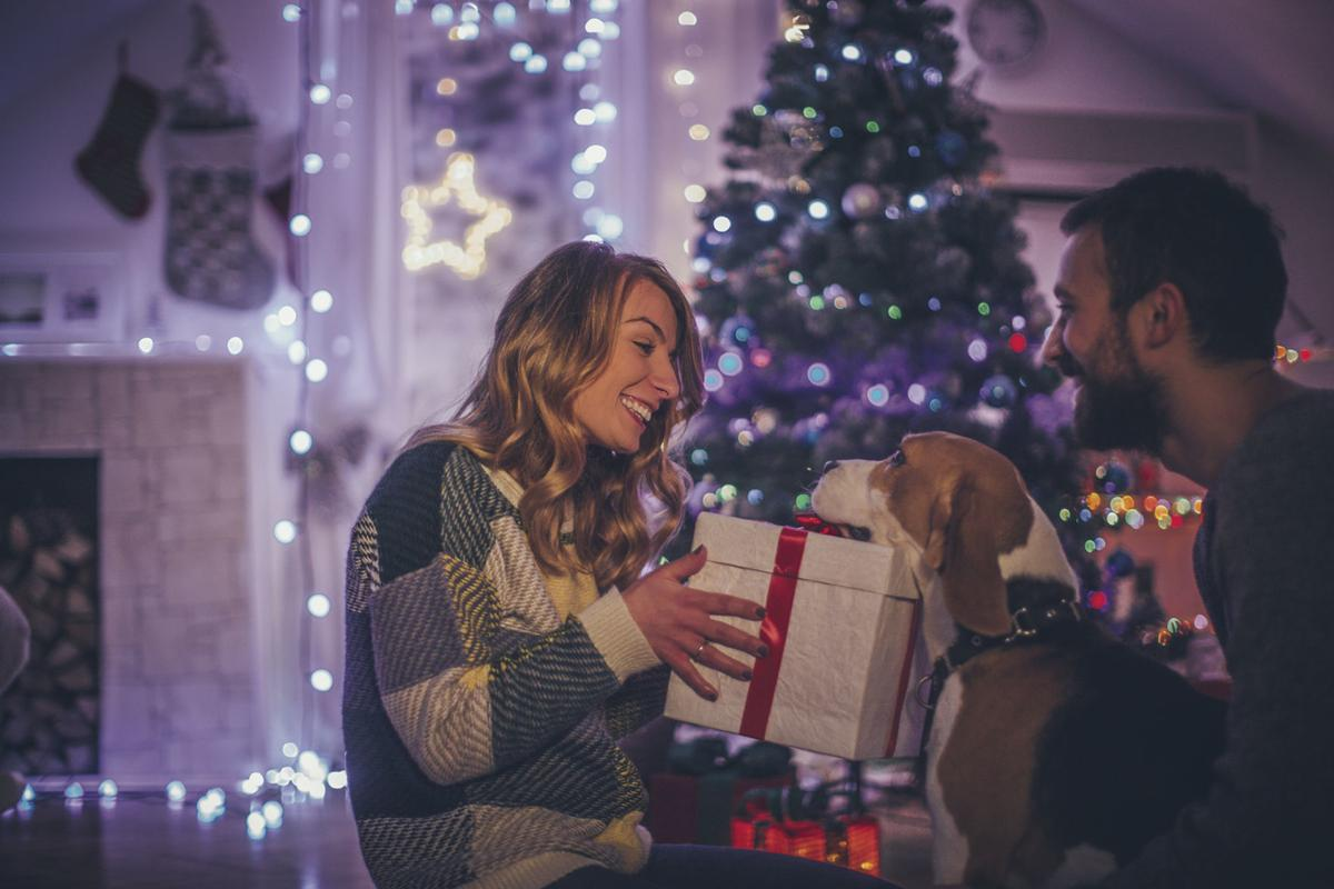 Paw-some Presents: Holiday gift ideas for furry friends