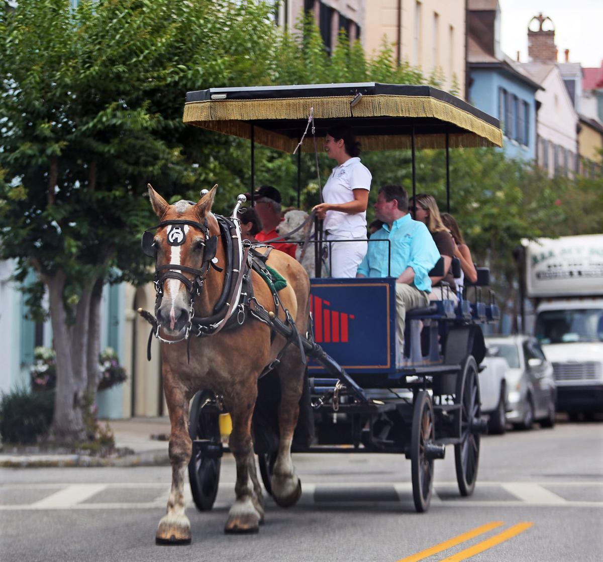 charleston carriage horses pulled off the streets due to heat  prompting mixed reactions