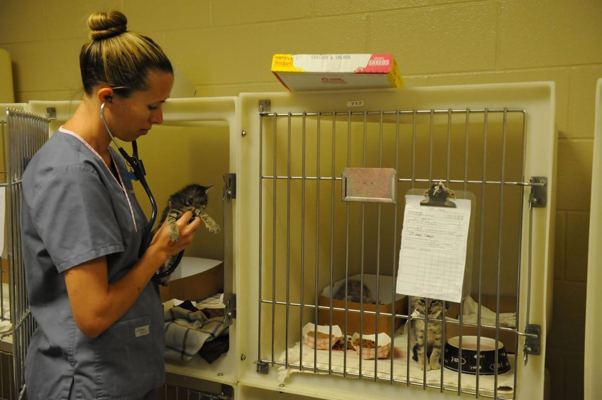 Society offering spay-neuter discounts