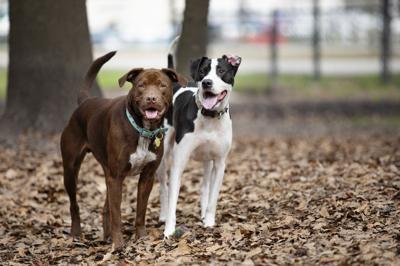 Avondale dog park.JPG (copy)