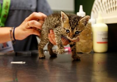 kitten.jpg (copy) (copy)