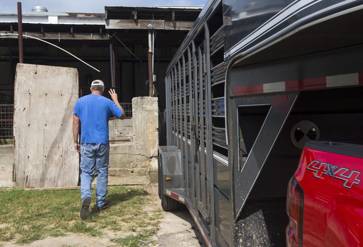 Livestock12.JPG