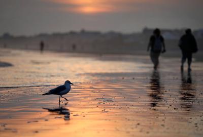 bird sunset.jpg