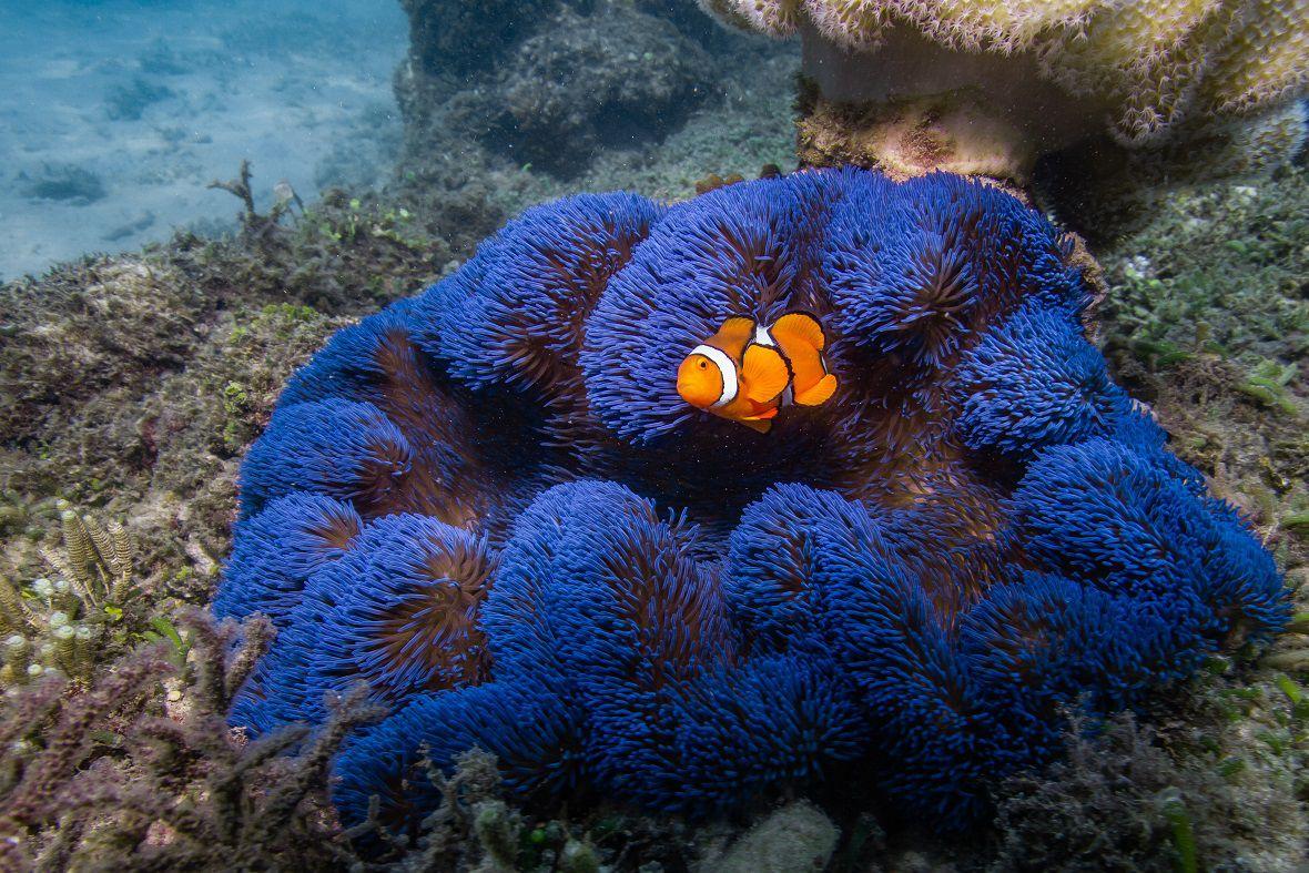 Aust_Cairns 5.jpg