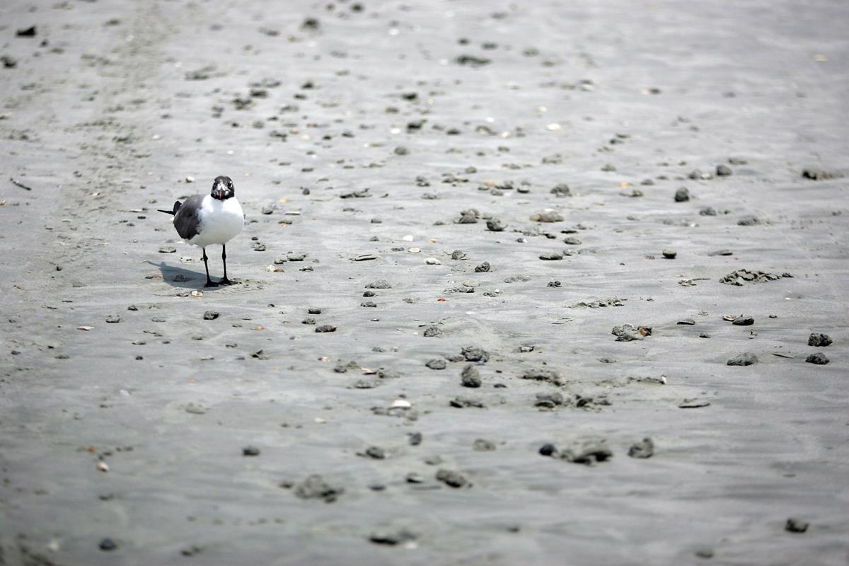 Army Corps and Folly Beach on rocky terms over beach renourishment
