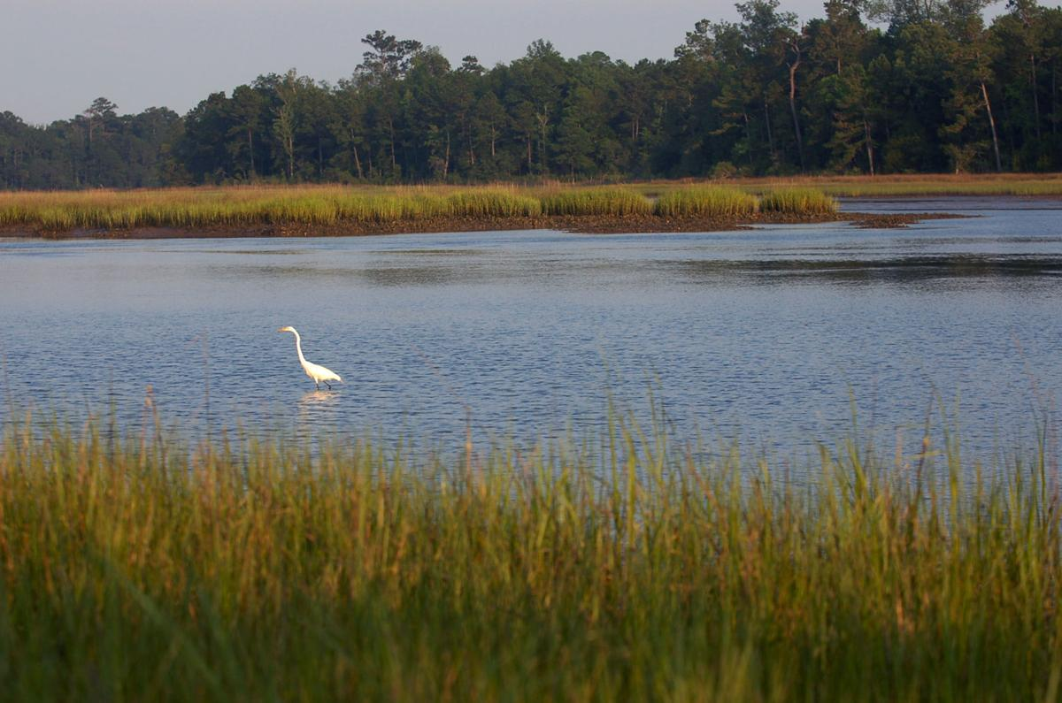 As the green runs out, Charleston County takes stock of preservation successes (copy)