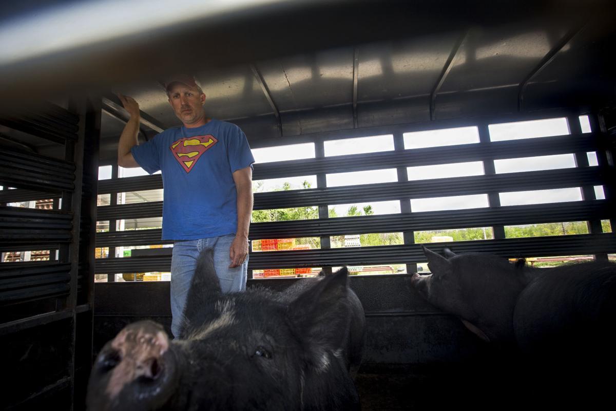 Livestock13.JPG