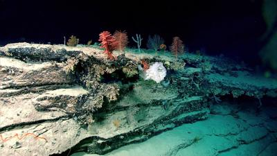 Windows to the Deep 2018: Exploration of the Southeast U.S. Continental Margin (copy)