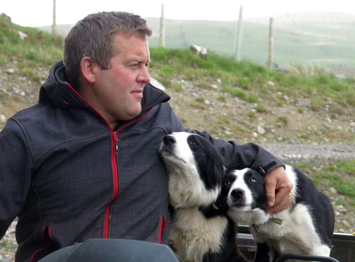Shepherd's life proves a hit in print, online