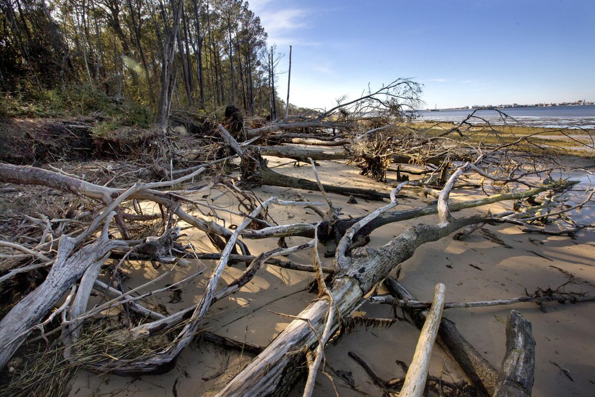 Fort Johnson dead trees.JPG