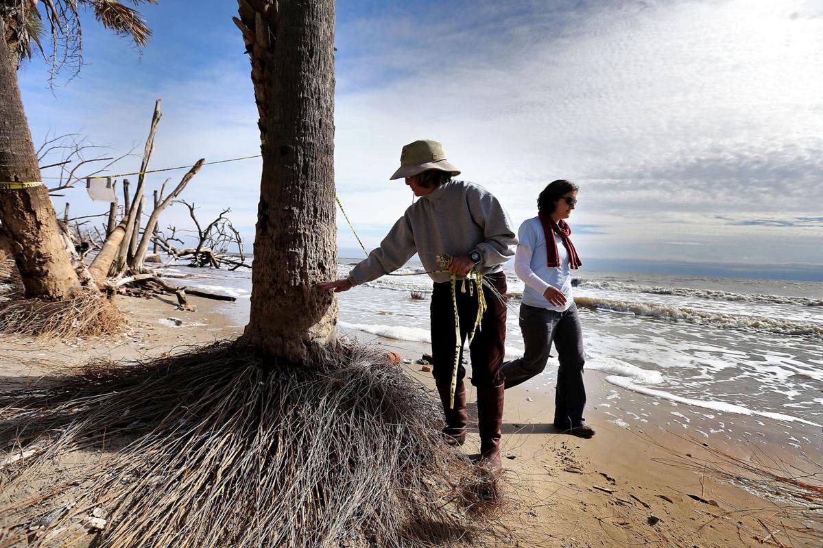 Aquarium joins effort to battle sea rise