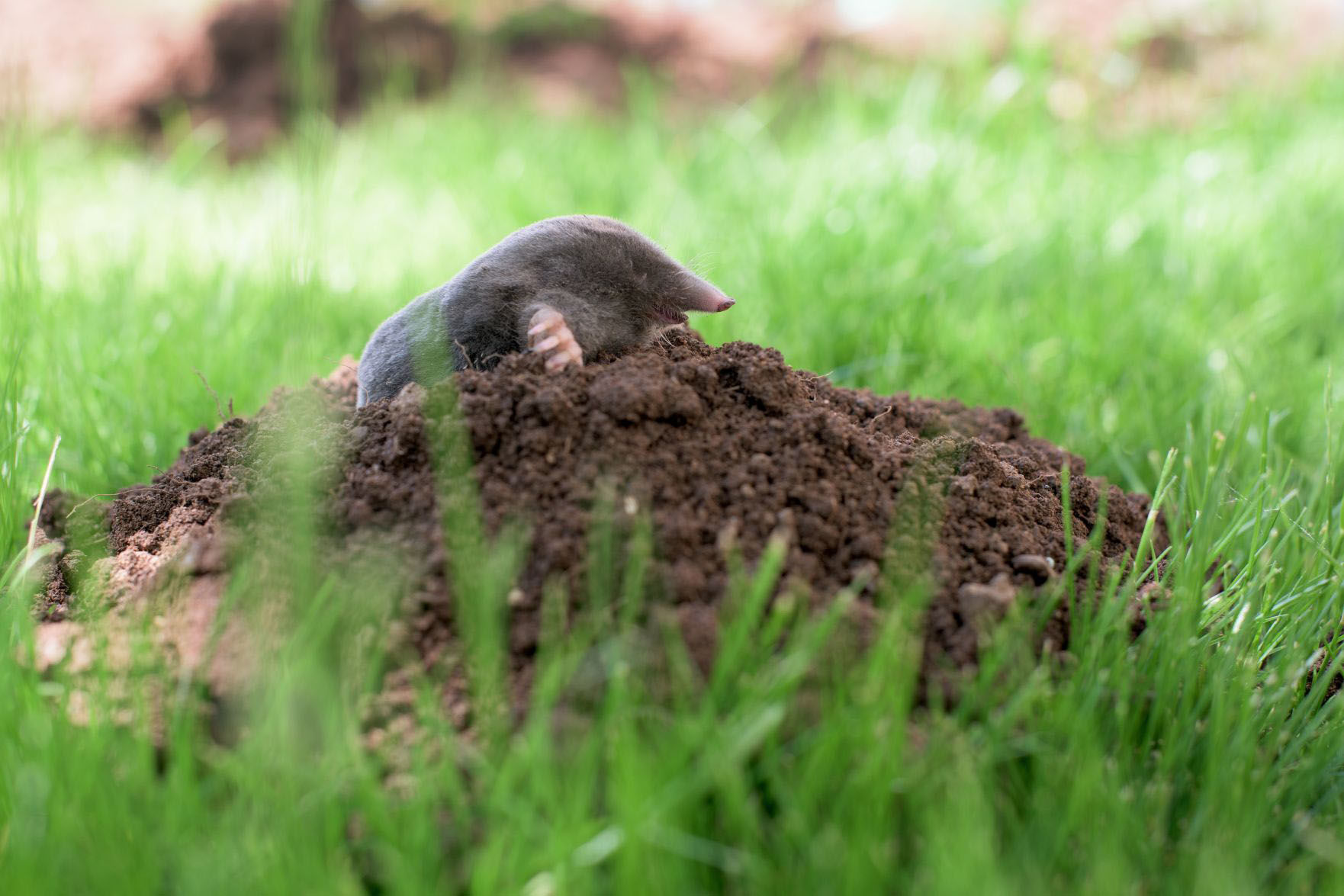 Darn vermin! Expert says try a three,pronged approach to rid