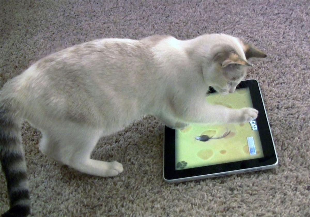 Tablet apps let cats play in cyberspace