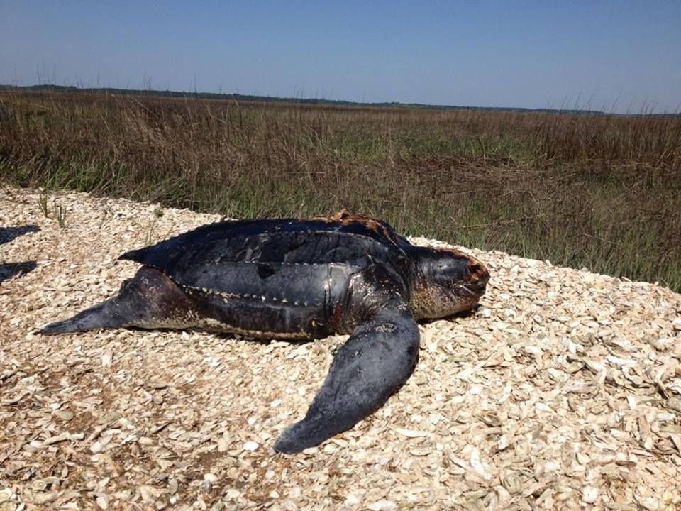 Wildlife choking on plastics