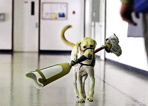 Brig inmates will train dogs to assist wounded veterans