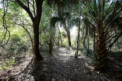 Sullivan's plans maritime forest boardwalks this summer