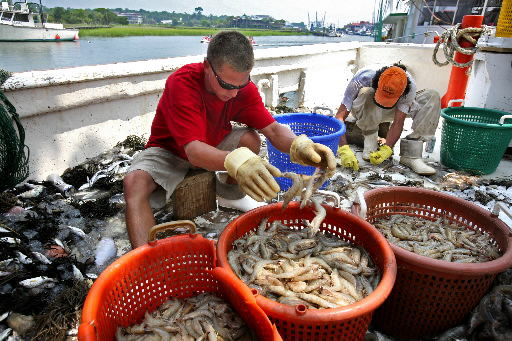 Shrimpers getting some delicious news