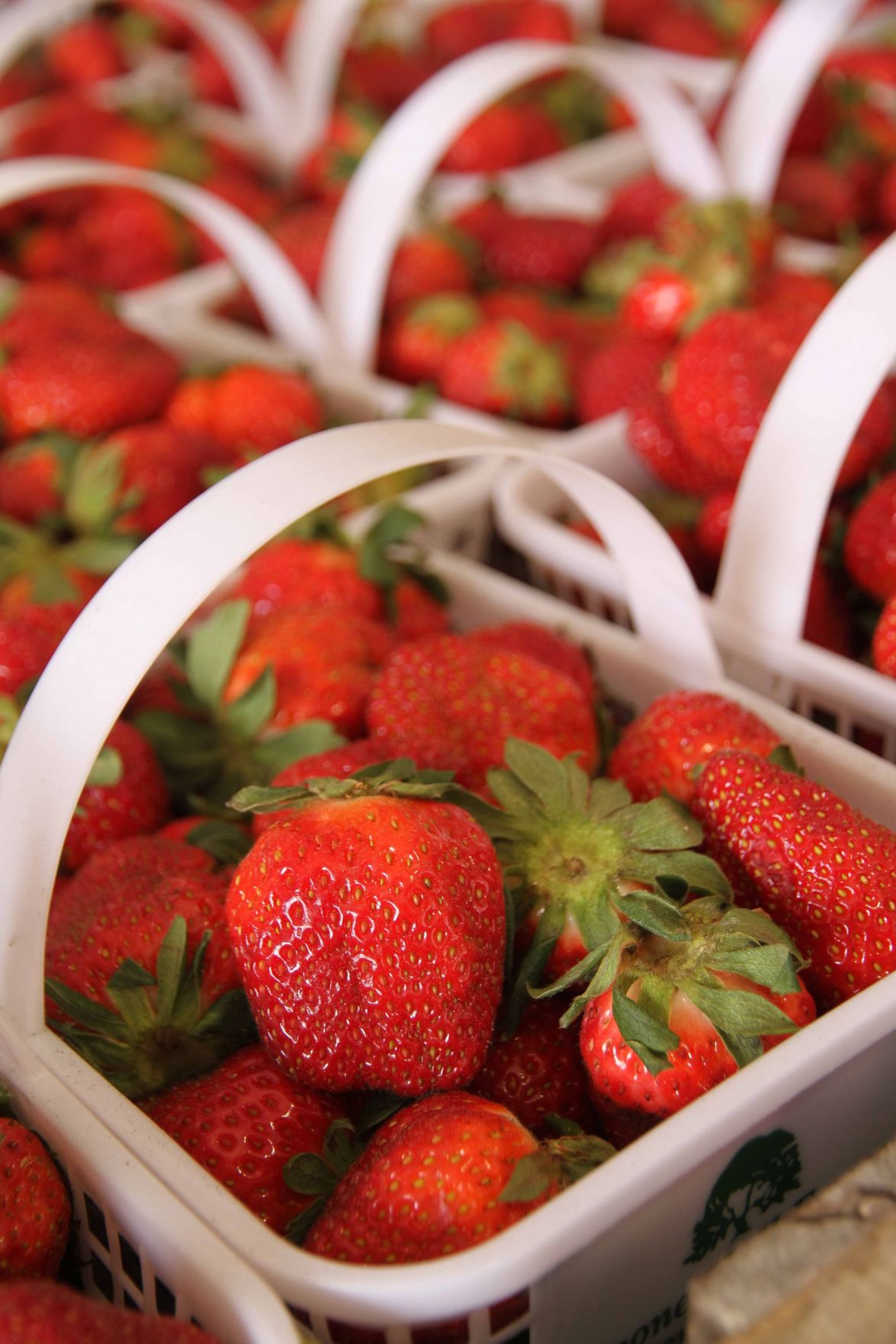 Boone Hall's Strawberry Festival brings carnival of rides, animals and family fun