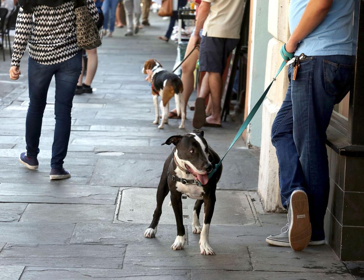 Charleston ranks as pet-friendly travel destination