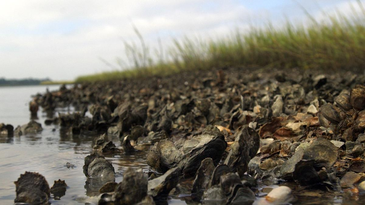 Shellfish don't grow in stores