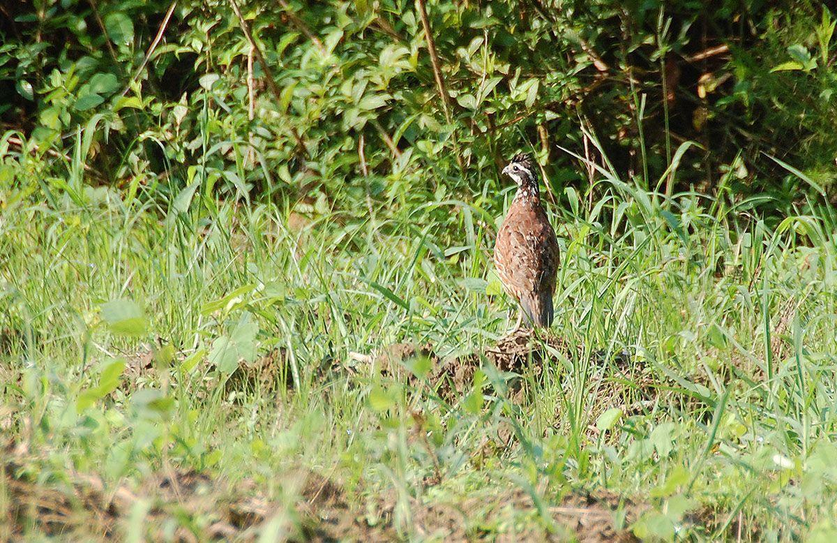 Wild quail seminar slated for March