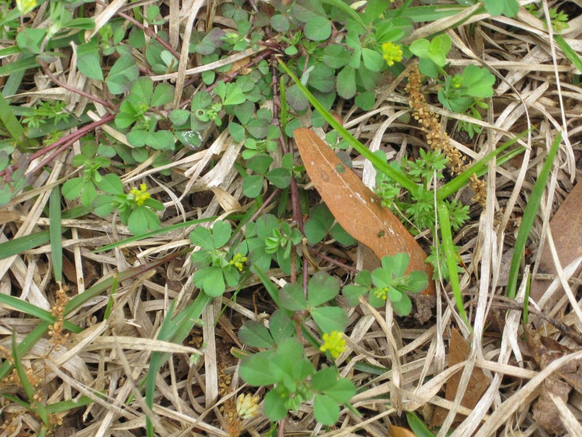 Attack Winter Weeds Perennials Can Be Kept In Check Home And