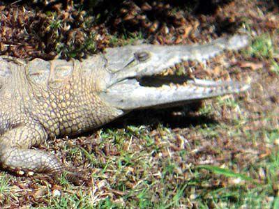 Crocodile handoff goes smoothly