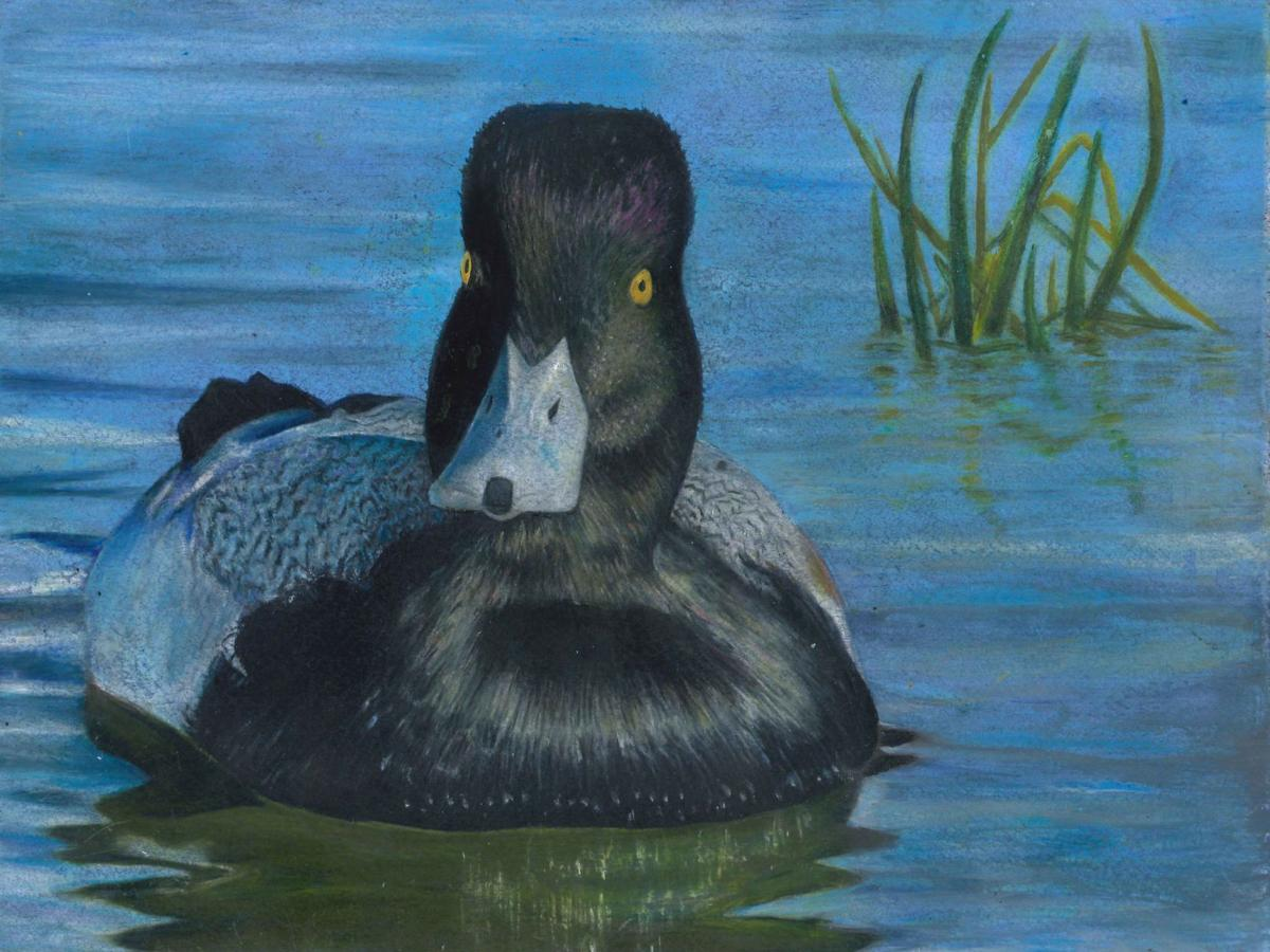 Cario student Castiller takes first at Junior Duck Stamp competition