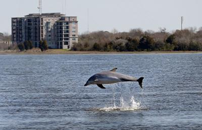 The story behind that awesome dolphin photo