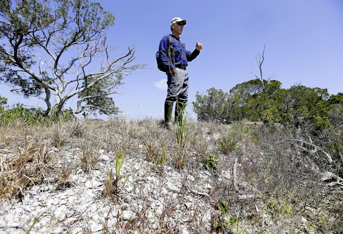 Fig Island shell rings a mystery, treasure Biggest preservation headache? Humans