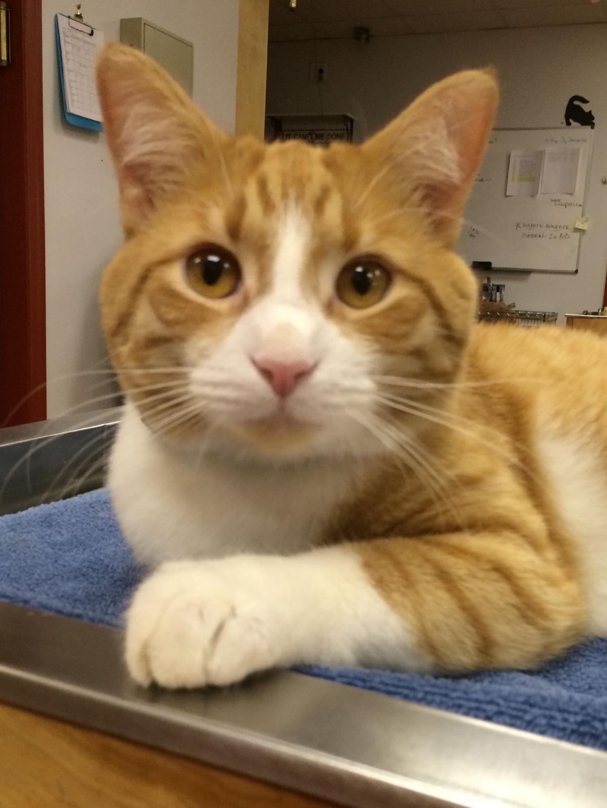 PET TALK: The Feline Five   Features   postandcourier.com